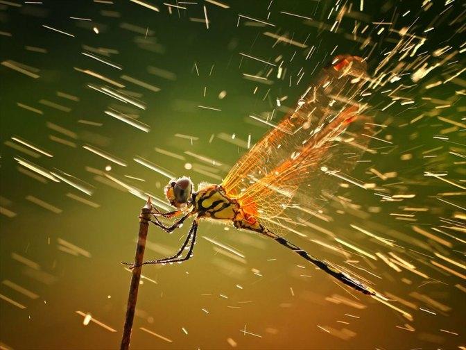 Dragon Fly HD Rain Wallpaper